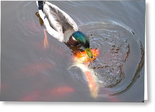 Duck Greeting Cards - Duck - Animal - 01136 Greeting Card by DC Photographer