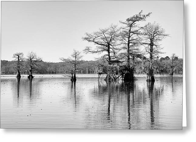 """caddo Lake"" Greeting Cards - Duck Blind on Caddo Lake Greeting Card by Mary Lee Dereske"