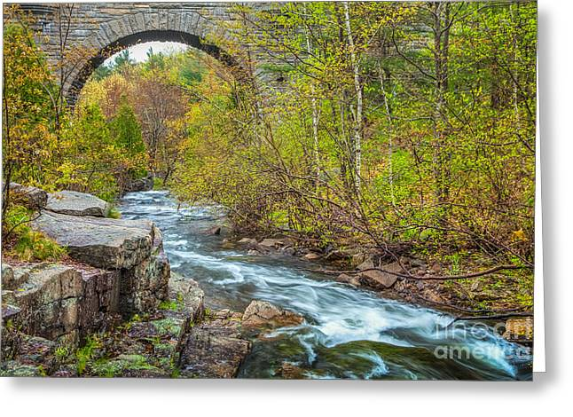 Spring In Maine Greeting Cards - Duck Brook Bridge in Acadia Greeting Card by Susan Cole Kelly