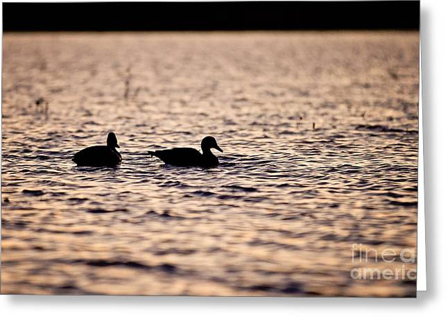 Louisiana Sunrise Greeting Cards - Duck Decoys Greeting Card by Scott Pellegrin