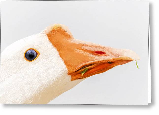 Geese Greeting Cards - Duck Duck Goose - Bird Greeting Card by Sharon Norman