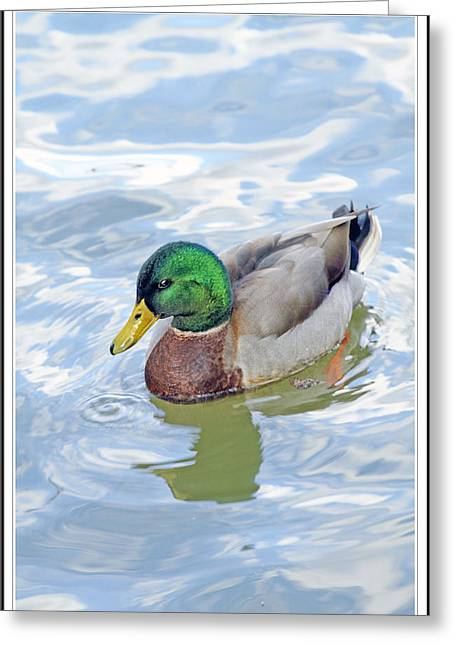 Duck Dynasty Greeting Cards - Duck Dynasty 54 Greeting Card by Geraldine Scull