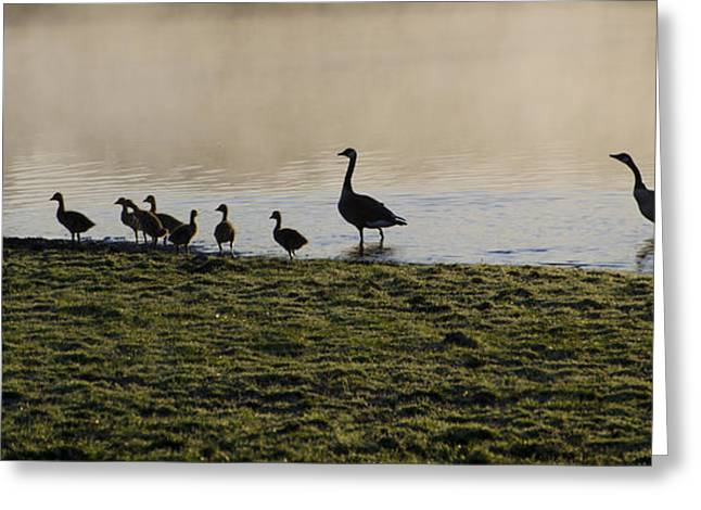 Ducklings Digital Greeting Cards - Duck Family Panorama Greeting Card by Bill Cannon
