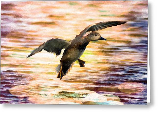 Bokeh Mixed Media Greeting Cards - Duck landing Greeting Card by Toppart Sweden