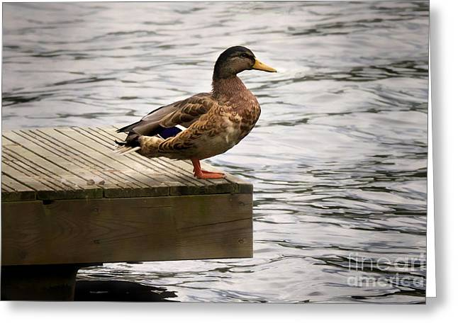Duck Greeting Cards - Duck Greeting Card by Lutz Baar