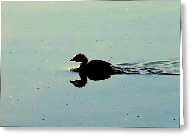 Reflection On Calm Pond Greeting Cards - Duck On Water Greeting Card by Dan Sproul