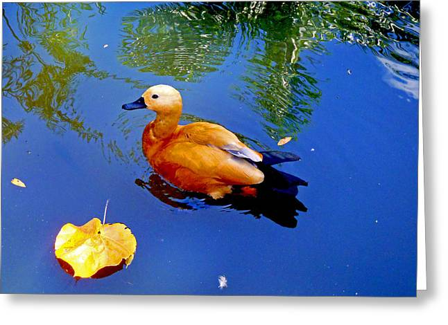 Unlimited Greeting Cards - Duck Pond Greeting Card by Carey Chen