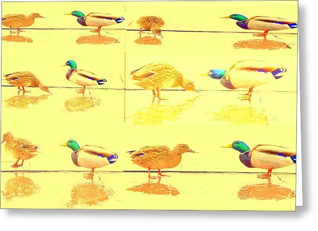 Disposition Greeting Cards - Duck Society Greeting Card by Hilde Widerberg