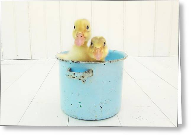Little Boy Greeting Cards - Duck Soup Greeting Card by Amy Tyler