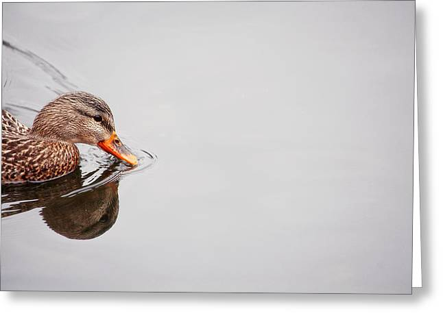 Reflection In Water Greeting Cards - Duck Swim Greeting Card by Karol  Livote