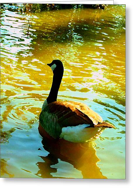 Wildlife In Gardens Greeting Cards - Duck Swimming Away Greeting Card by Amy Vangsgard
