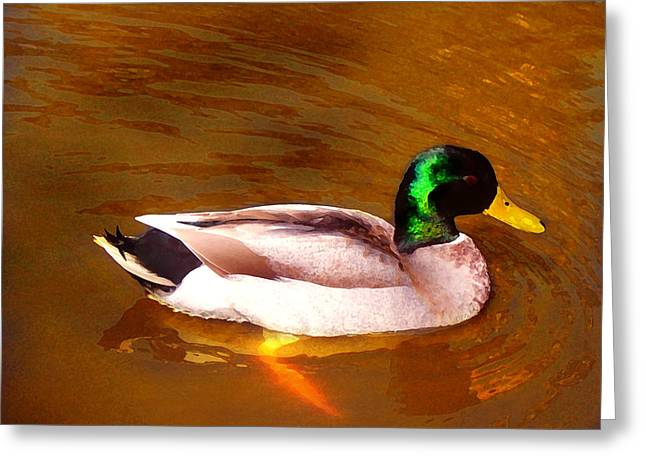 Wildlife In Gardens Greeting Cards - Duck Swimming on Golden Pond Greeting Card by Amy Vangsgard