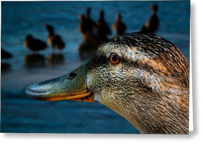 Duck Watching Ducks Greeting Card by Bob Orsillo