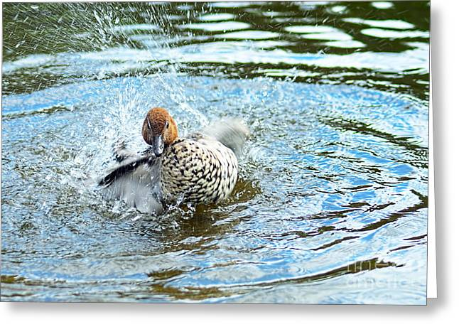 Aquatic Bird Greeting Cards - Duck with Outboard Motor by Kaye Menner Greeting Card by Kaye Menner