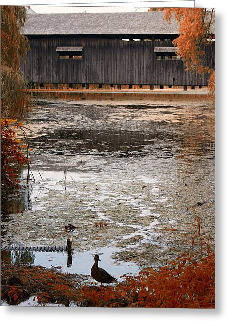 Folgers Greeting Cards - Ducking Under The Bridge Greeting Card by Jeff Folger