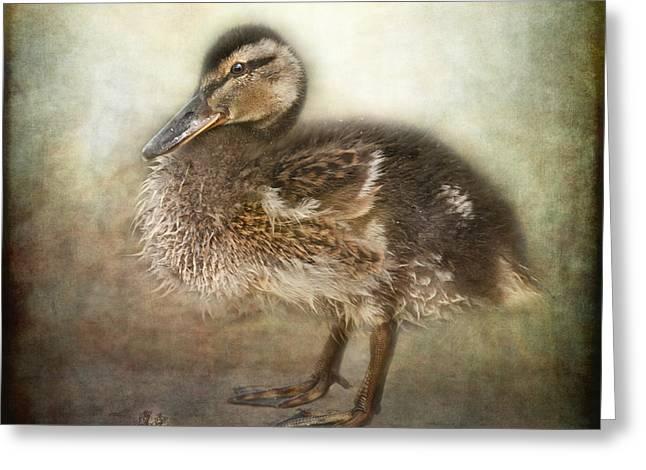 Baby Mallards Digital Art Greeting Cards - Duckling Greeting Card by Pauline Fowler