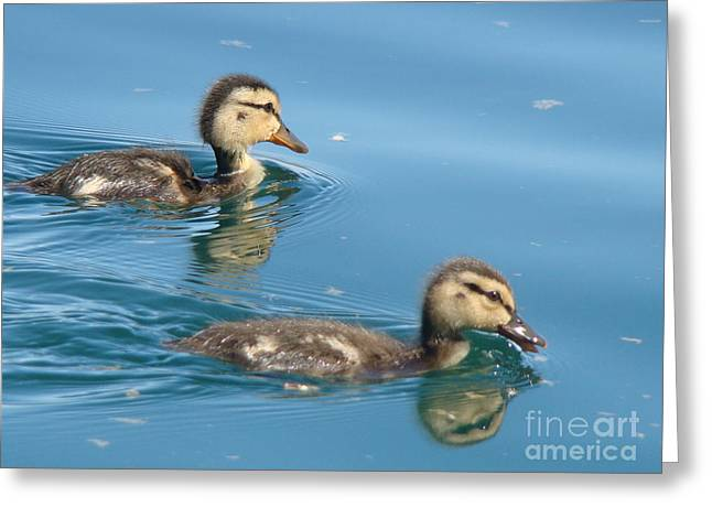 Ducklings Mixed Media Greeting Cards - Ducklings Greeting Card by Beverly Guilliams