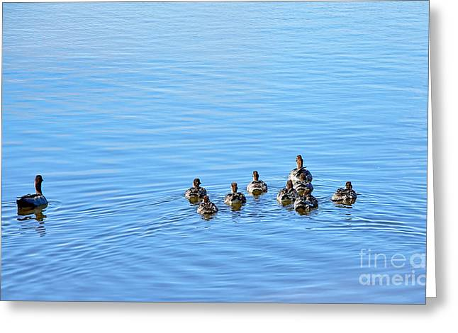 Day Out Greeting Cards - Ducklings Day Out Greeting Card by Kaye Menner