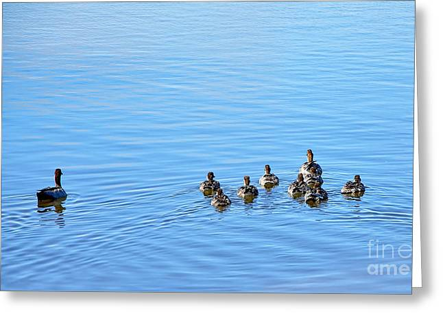 Ripples In Water Greeting Cards - Ducklings Day Out Greeting Card by Kaye Menner