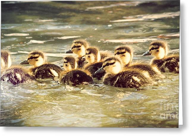 Ducklings Greeting Card by Kyle Walker