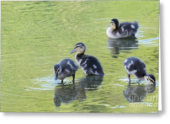 Ducklings Greeting Cards - Ducklings Greeting Card by Miguel Celis