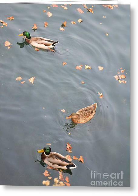 Scene Ceramics Greeting Cards - Ducks and Autumn Leaves Greeting Card by Kathleen Pio