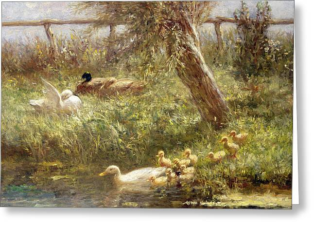 Tree Stump Greeting Cards - Ducks and ducklings Greeting Card by David Adolph Constant Artz