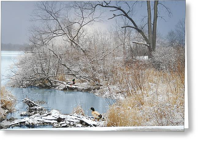 Ducks By The Pond Greeting Card by Mary Timman