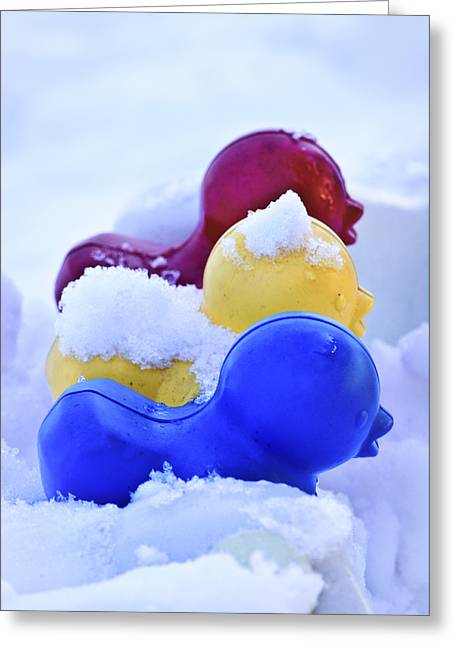 Snow Drifts Greeting Cards - Ducks in a Row Greeting Card by Christi Kraft