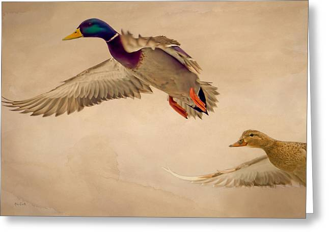 Hunting Cabin Greeting Cards - Ducks In Flight Greeting Card by Bob Orsillo