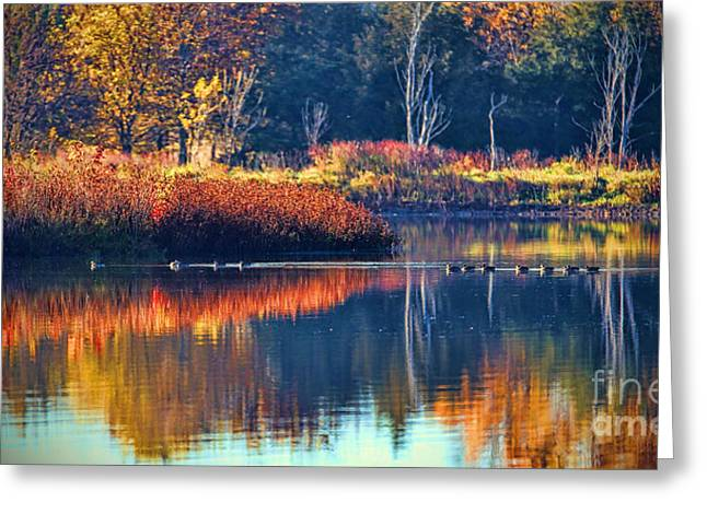 Chalco Hills Recreation Area Greeting Cards - Ducks in Paradise Greeting Card by Elizabeth Winter