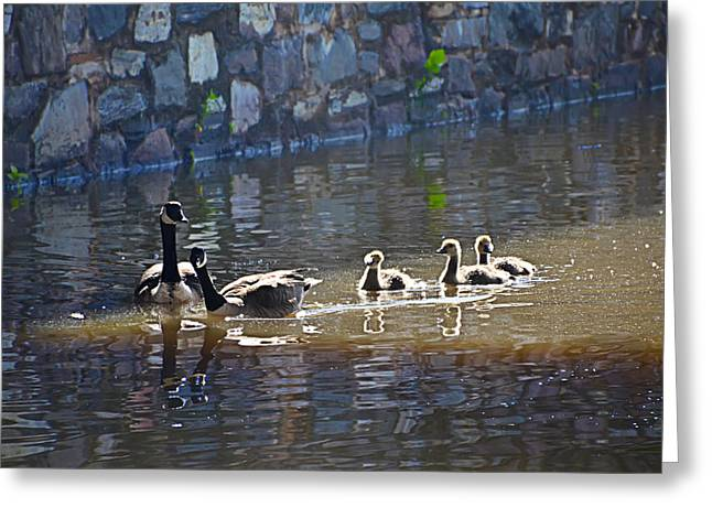 Ducklings Digital Greeting Cards - Ducks in the Canal Greeting Card by Bill Cannon