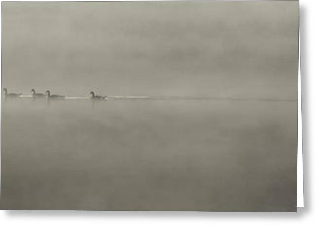 Ducks Lakes Greeting Cards - Ducks in the Mist Greeting Card by Aaron S Bedell