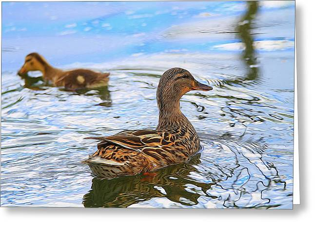 Water Fowl Mixed Media Greeting Cards - Ducks In The Water Greeting Card by Dan Sproul