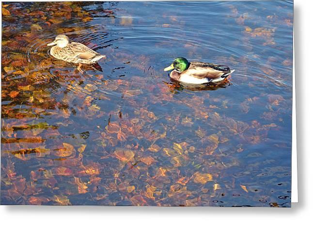 Pond In Park Greeting Cards - Ducks Leaf Deep Greeting Card by Linda Troski