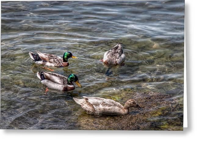 Ducks Lakes Greeting Cards - Ducks Greeting Card by Leonardo Marangi