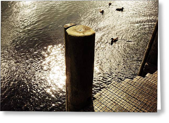 Boardwalk Greeting Cards - Ducks Greeting Card by Les Cunliffe