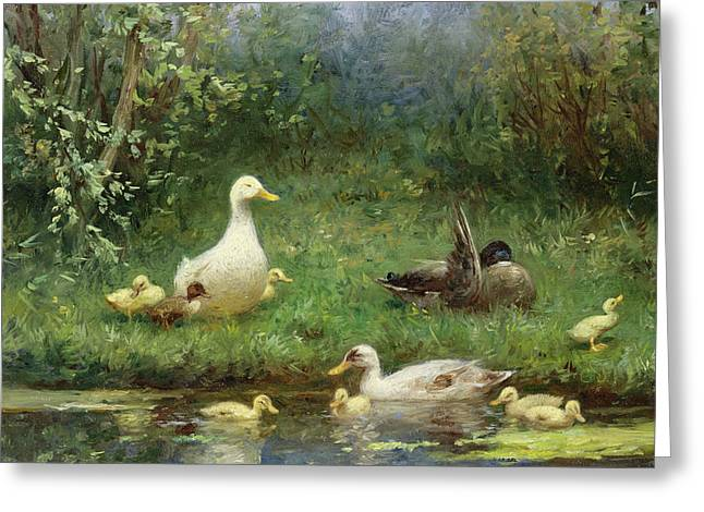 Ducklings Greeting Cards - Ducks on a riverbank Greeting Card by David Adolph Constant Artz