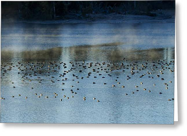 Pond In Park Greeting Cards - Ducks On Indian Pond   #9868 Greeting Card by J L Woody Wooden