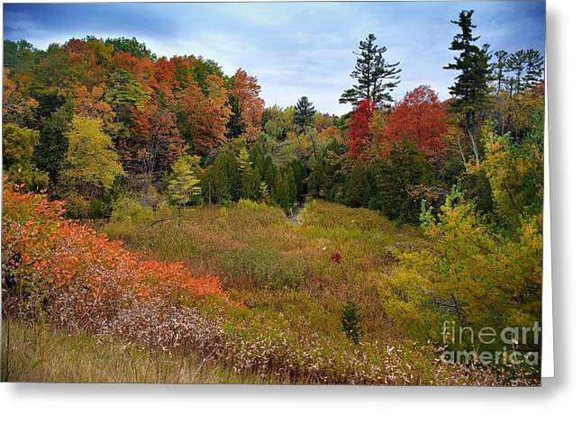 Branch Hill Pond Greeting Cards - Duffins Creek Autumn Greeting Card by Henry Kowalski