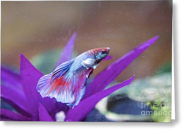 Iridescent Unicorn Greeting Cards - Dumbo Betta Greeting Card by Jennifer Gaida