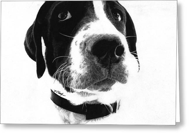 Charcoal Dog Drawing Drawings Greeting Cards - Duncan - Pointer Greeting Card by Justin Clark