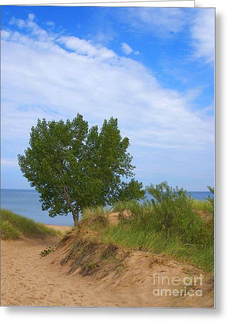 Indiana Dunes Greeting Cards - Dune Greeting Card by Ann Horn