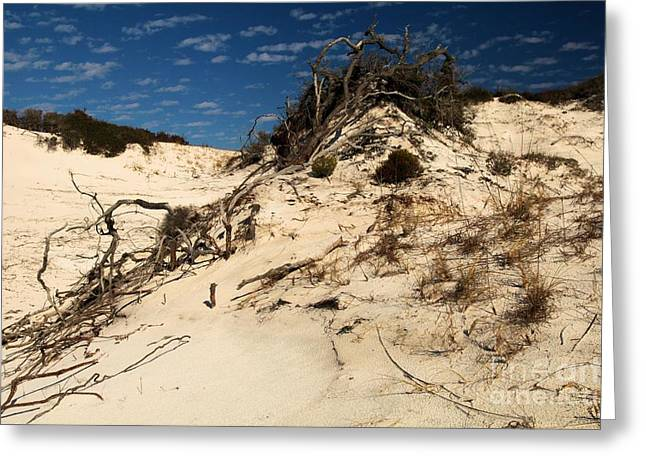 Pristine Beaches Greeting Cards - Dune Glue Greeting Card by Adam Jewell