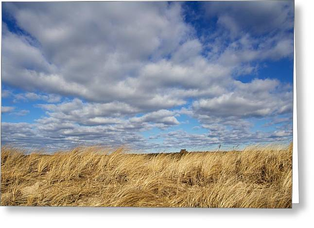 Dune Grass And Sky Greeting Card by Allan Morrison