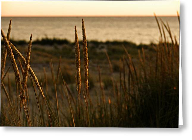 Ludington State Park Greeting Cards - Dune Grass at Sunset Greeting Card by Michelle Calkins