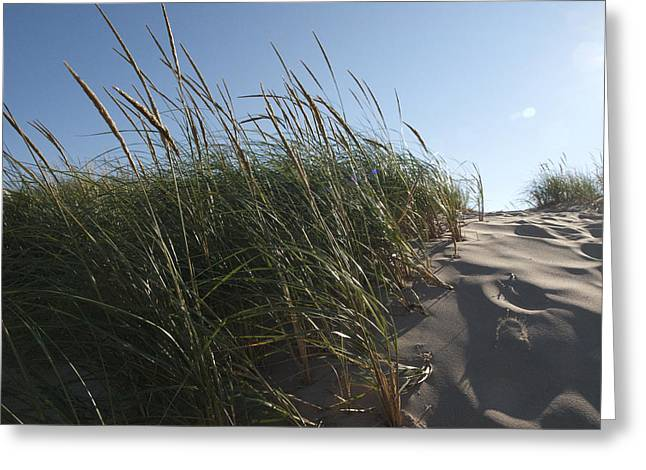 Tara Lynn Greeting Cards - Dune Grass Greeting Card by Tara Lynn