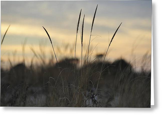 Bathroom Prints Greeting Cards - Dune Grass Greeting Card by Terry DeLuco