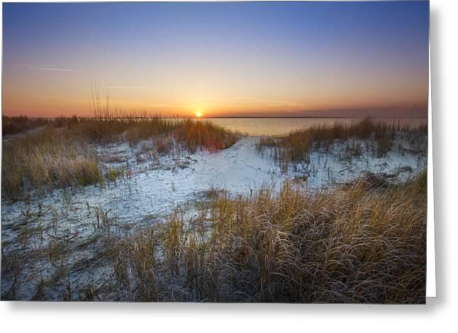 Sanddune Greeting Cards - Dune Grasses Greeting Card by Debra and Dave Vanderlaan