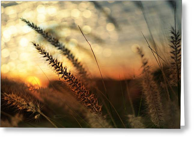 Florida House Greeting Cards - Dune Greeting Card by Laura  Fasulo
